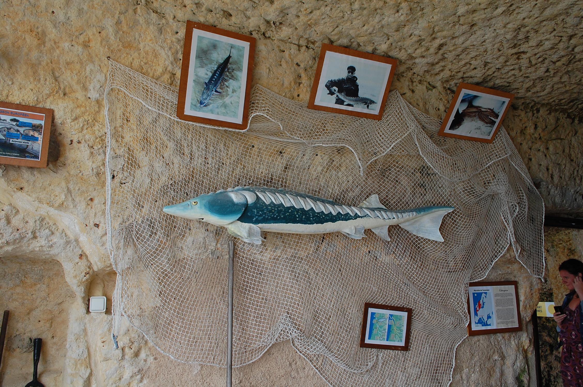 Les Grottes du Régulus à Meschers-sur-Gironde