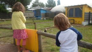 Mini ferme à la ferme de Magné à Saint Gemme