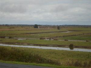 Vue sur les marais à bord du Train des Mouettes à Saujon