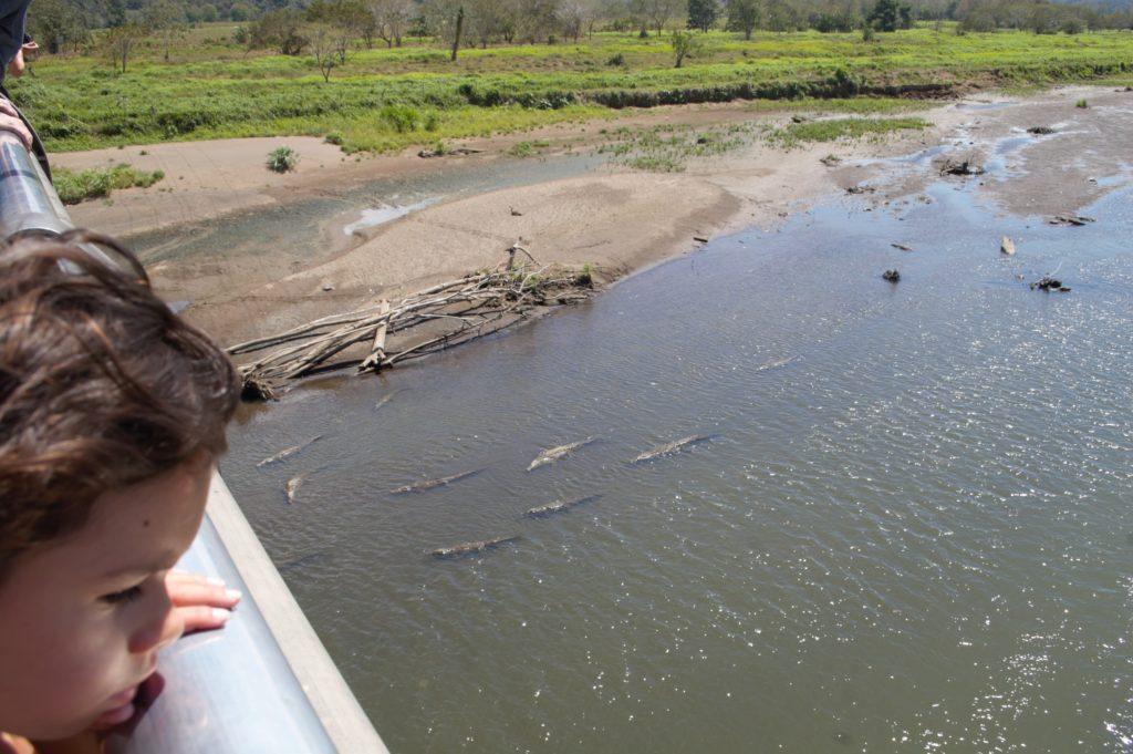 Pont des crocodiles à Tarcoles prés de Jaco Costa Rica