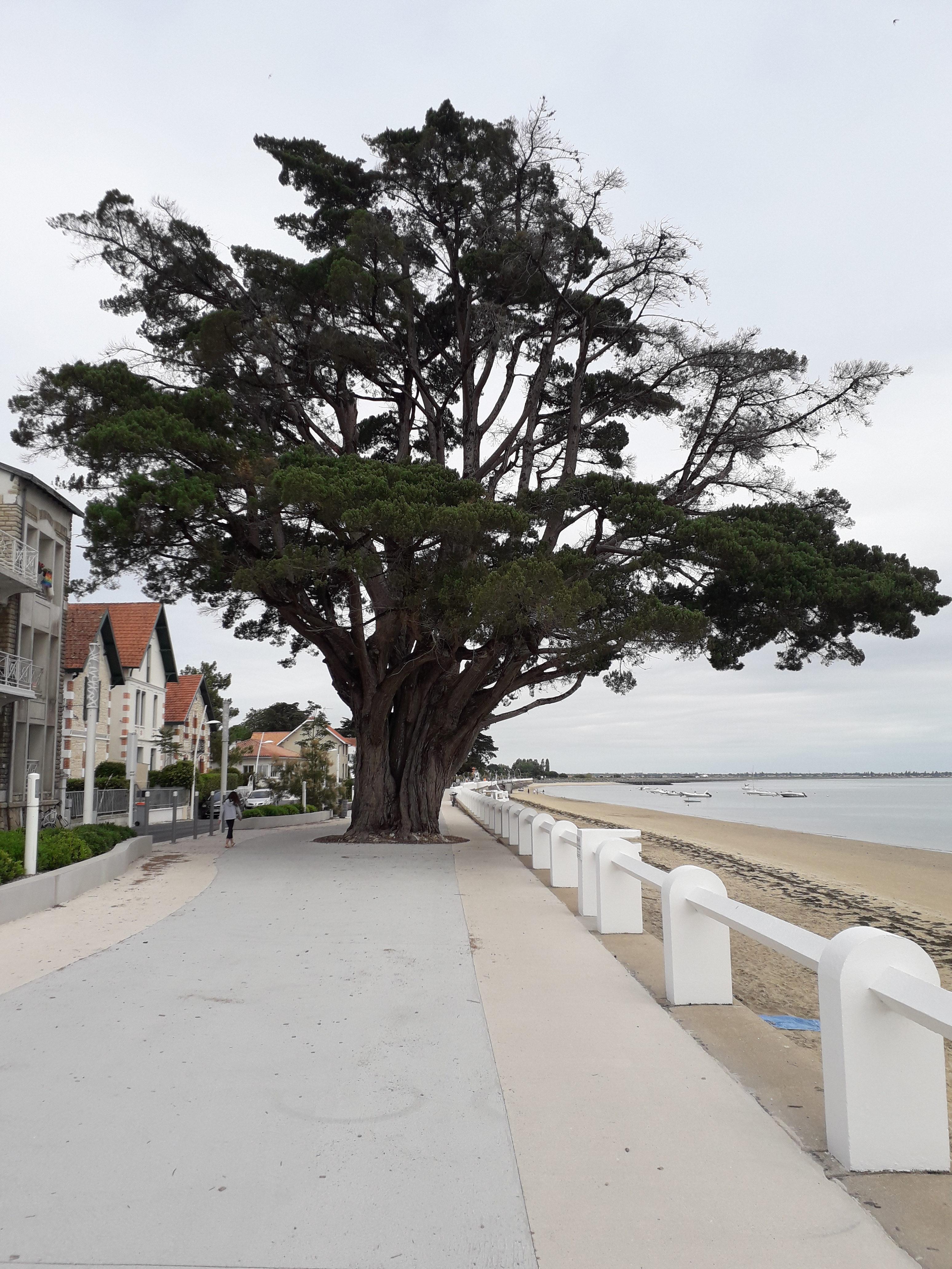 Front de mer de St-Trojan -les-Bains Île d'Oléron