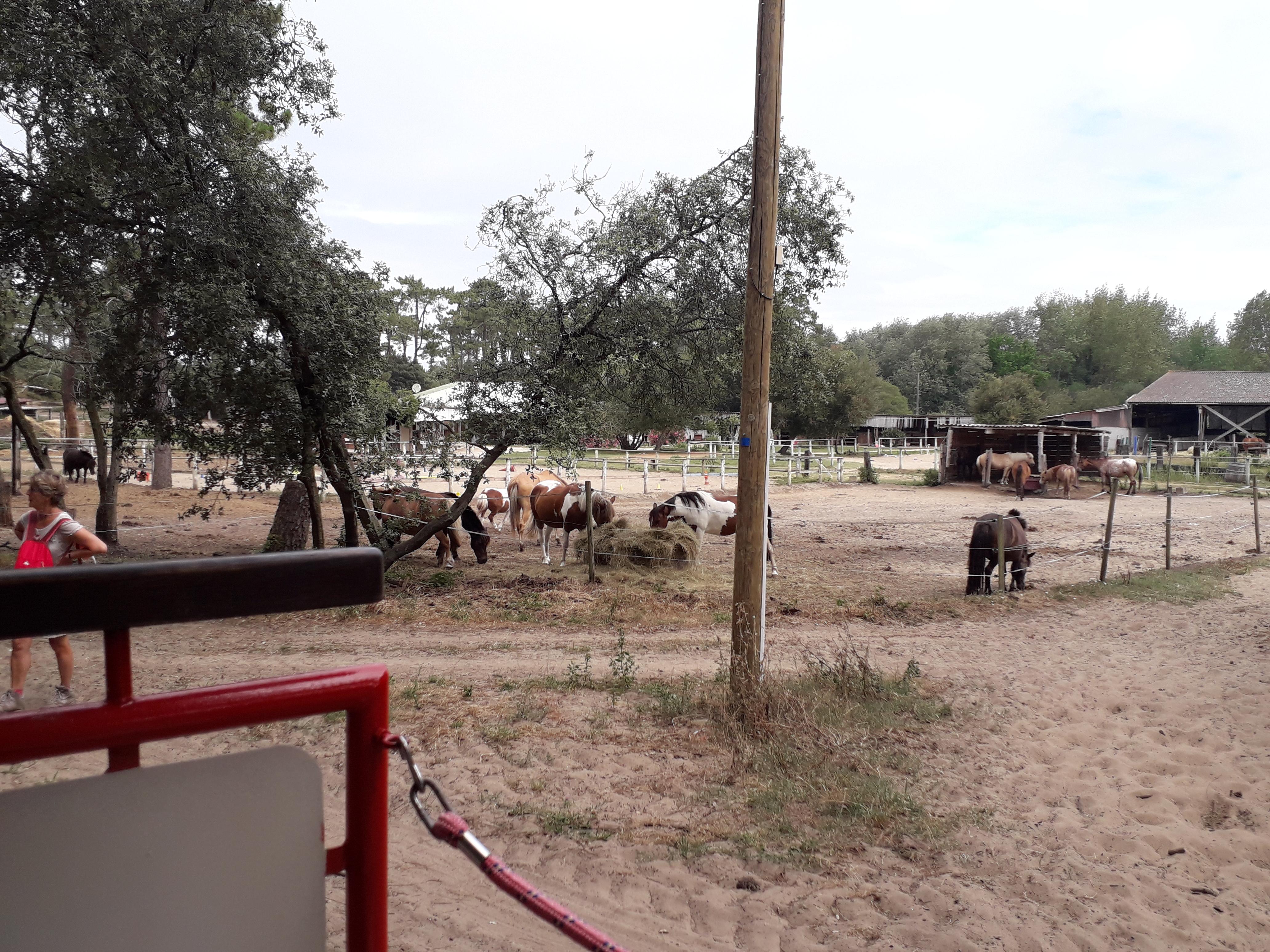 Petit centre équestre le long de la balade du petit Train de St-Trojan sur l'île d'Oléron
