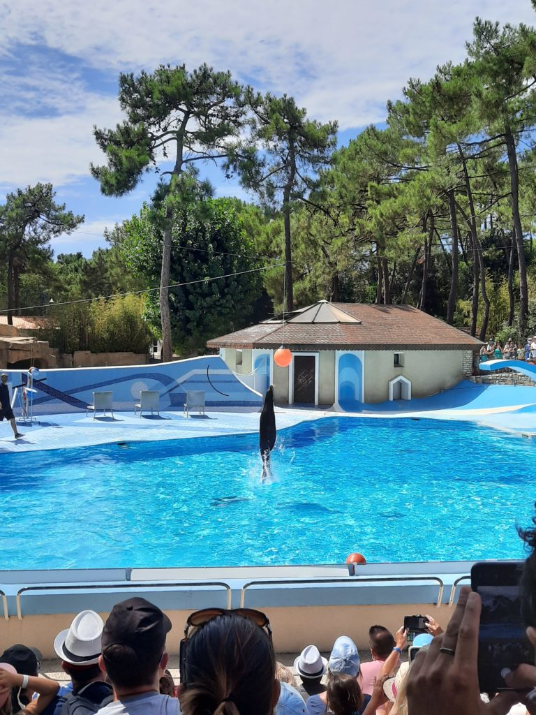 Spectacle des otaries Zoo de la Palmyre aux Mathes La Palmyre