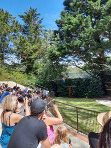 Spectacle de Perroquets Zoo de la Palmyre aux Mathes La Palmyre