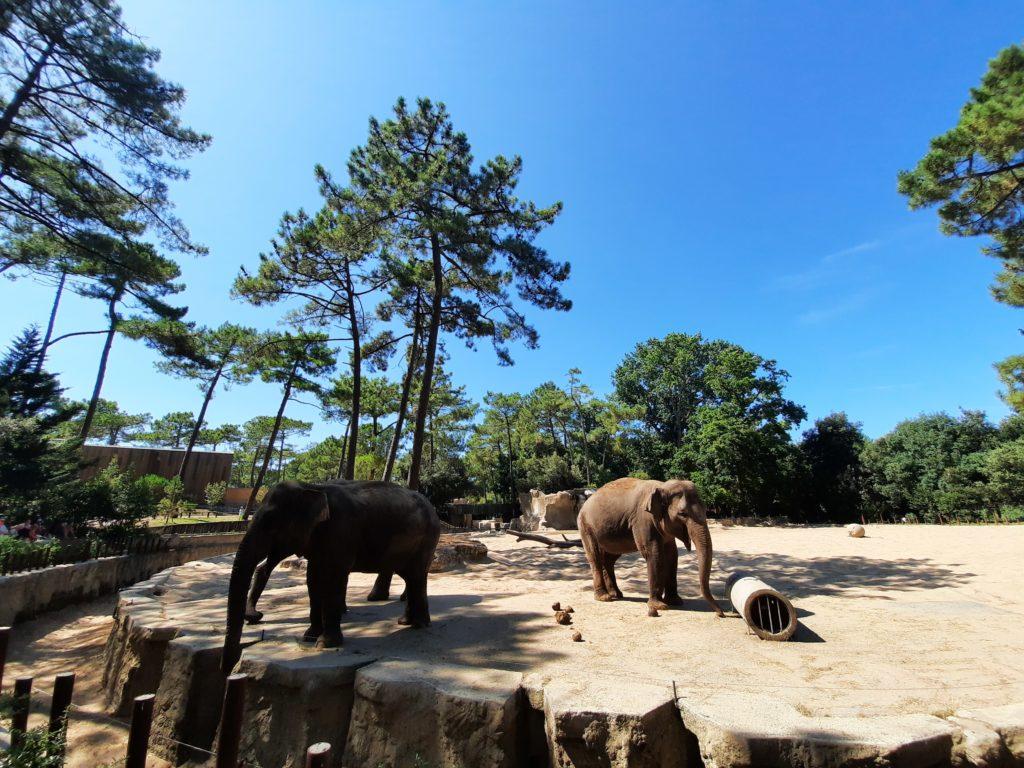 Éléphants Zoo de la Palmyre aux Mathes La Palmyre