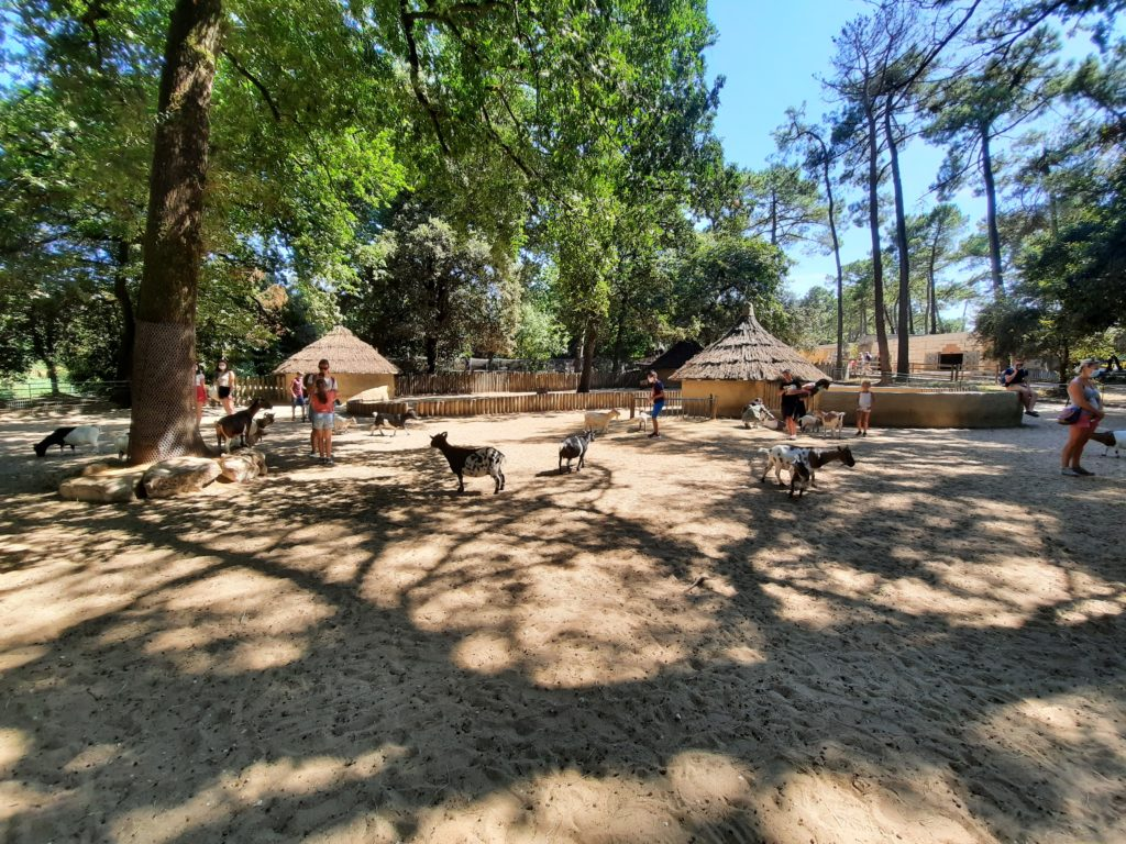 Parc Chèvres naines Zoo de la Palmyre aux Mathes La Palmyre