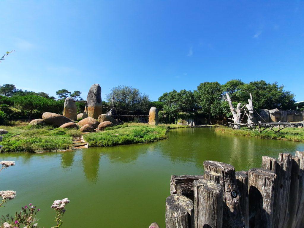 Orangs-outans, Chimpanzés, Gorilles au Zoo de la Palmyre aux Mathes La Palmyre